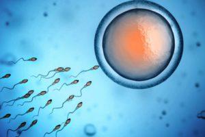 embryo freezing | ivf
