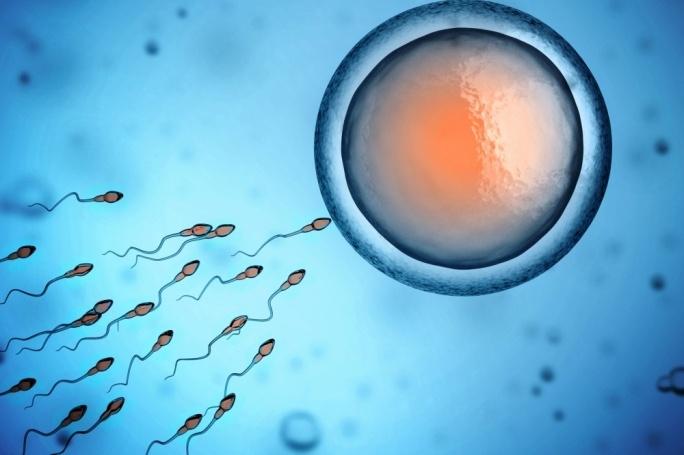embryo freezing | The Andrology Corner