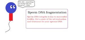 Sperm DNA fragmentation | male infertility treatment service