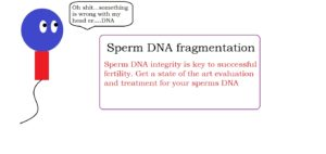 Sperm DNA fragmentation | male infertility treatment service