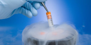embryo freezing